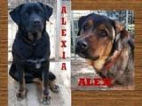 ALEX Y ALEXIA